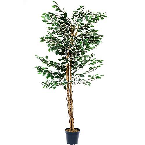 PLANTASIA® Ficus-Baum, Echtholzstamm, Kunstbaum, Kunstpflanze - 160 cm, Schadstoffgeprüft