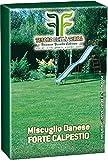 Seme Prato Festuca Arundinaceea Kg 5, Mondonatura Srl