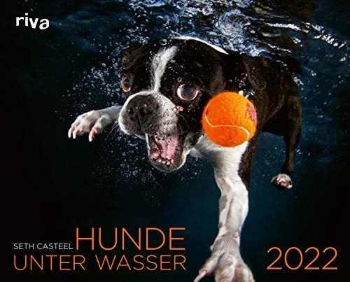Hunde unter Wasser 2022: Wandkalender