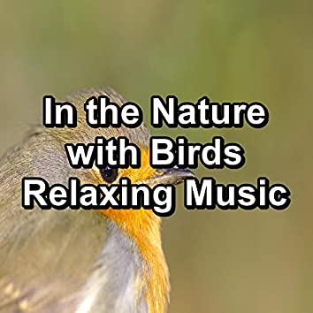 In the Nature with Birds Relaxing Music