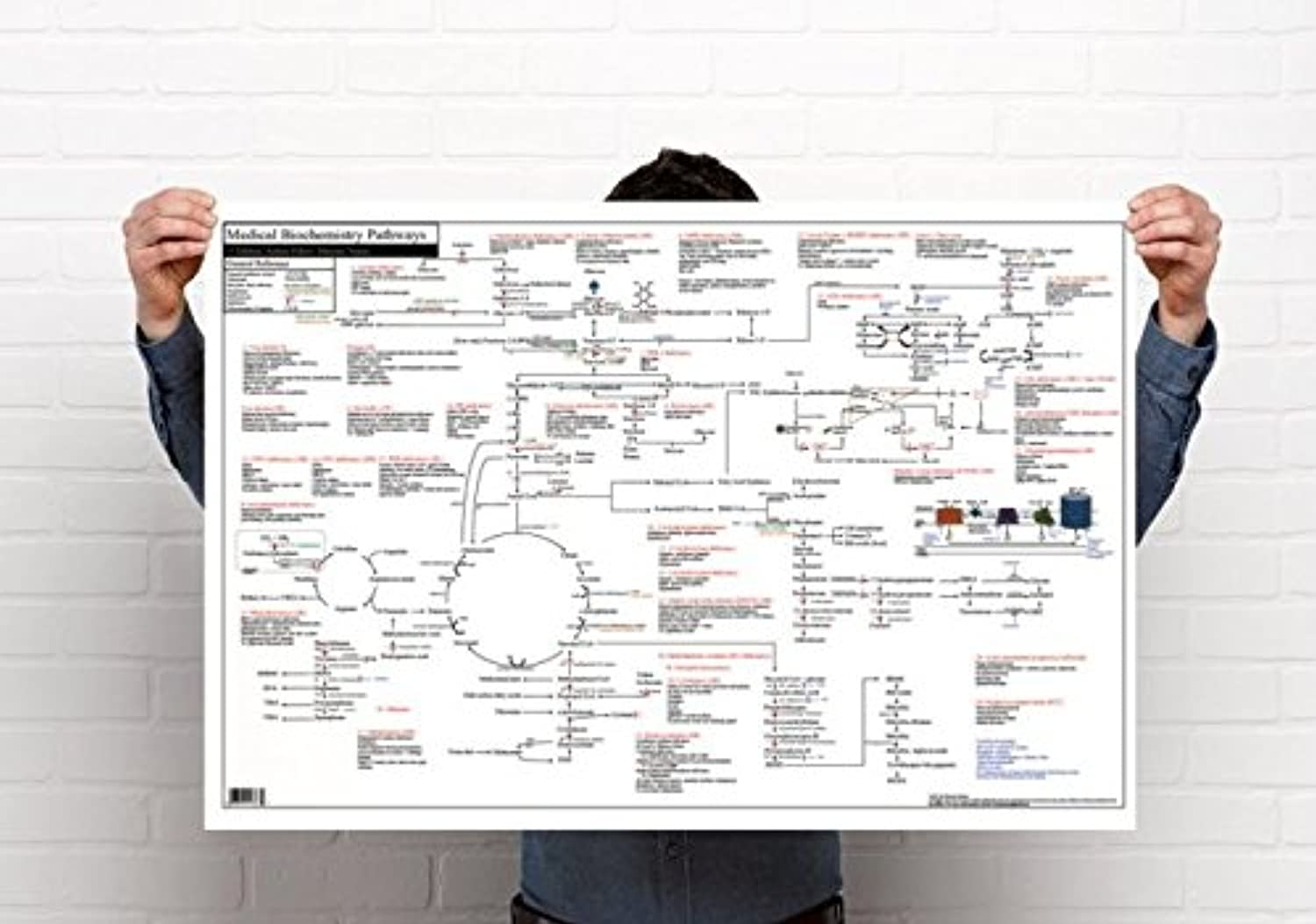 Medical Biochemistry Pathways Poster (36 x 24 inches, Non-Laminate Standard)