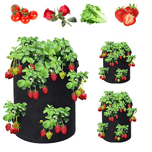 Duzhengzhou Bolso de Planta de Fresa de 10 galones, Bolso Transpirable, Tela no Tejida, ollas, wtih 8 Lados, Asas equipados, Traje para Flores de Fruta de Verduras de Fresa...