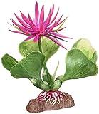 Penn-Plax Plant-B Rojo Hyac