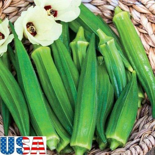 Samen-Paket Nicht Pflanzen: Samen: USA Eagle Pass Okra - seedsNON GMO