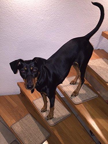 BELLOsteps® Stufenmatten für kleine Hunde ohne Kleber, 15er Set Sisal Natur
