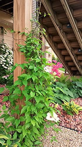 Scroll Trellis Vinyl Lattice Garden Trellis for Narrow Spaces, Deck Posts, Fence Posts, Customizable...