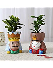 Ferns N Petals Indoor Plants