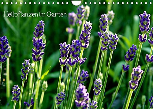Heilpflanzen im Garten (Wandkalender 2022 DIN A4 quer): Attraktive Blüten und Blätter mit medizinischer Wirkung (Monatskalender, 14 Seiten ) (CALVENDO Gesundheit)