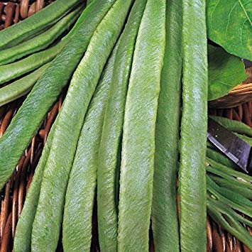Shop Meeko Kings Seeds - haricots - Haricot Streamline - Graines de 1kg