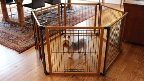 Cardinal Gates Perfect Fit Pet Gate for Pugs