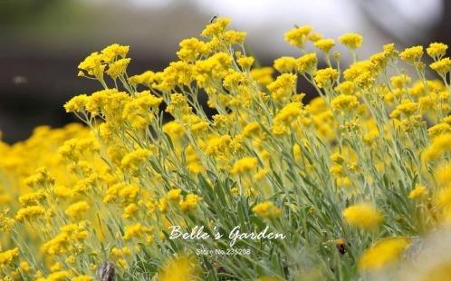 100 pcs/sac variétés de graines de marguerite, belle plante de fleurs Accueil Jardin Fleurs en pot semences intérieur Graines Bonsai 1