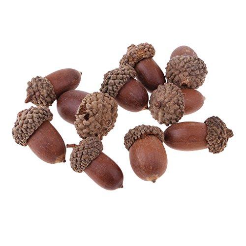 Homyl 10 Stücke Mini Eicheln zum Basteln, DlY, Bastelbedarf, Red Oak echte Eicheln