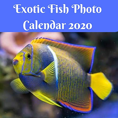 Exotic Fish Photo Calendar 2020: 8.5x8.5 Monthly calendar with US/UK/Canadian/ Christian/ Jewish/Muslim Holidays