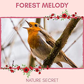 Forest Melody - Nature Secret