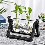 KNIKGLASS Vaso idroponico Decorazione Supporto in Legno con idroponica Vaso in Vetro Vaso sospeso Vaso di Fiori Vaso da Tavolo Decorazione Vaso per Piante idroponiche(2 vasi,Nero)