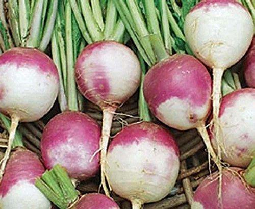 Navet graines, violet Haut blanc Globe Navet, Heirloom, organique, non ogm, 120 graines