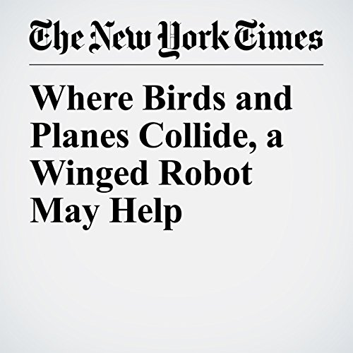 Where Birds and Planes Collide, a Winged Robot May Help audiobook cover art