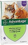 IMG-2 advantage soluzione spot on gatti