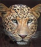 Brandsseller Tiermotiv Decke Kuscheldecke Tagesdecke Wohndecke 150x200 cm (150x200 cm, Leopard)