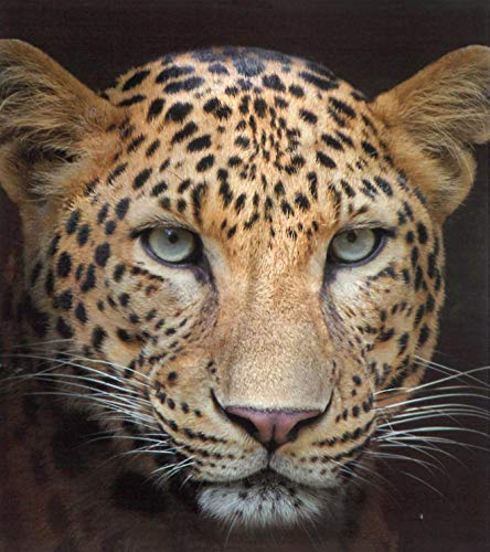 Brandsseller Natur-Fell-Shop - Manta (150 x 200 cm, 150 x 200 cm), diseño de leopardo