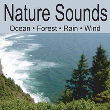 Nature Sounds: Ocean Waves, Forest Sounds, Rain, Soft Breezes Wind