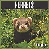 Ferrets 2021 Wall Calendar: 16 Months calendar 2021, Pet Animal Calendar