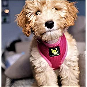 Classic Dog Harness Innovative Mesh No Pull No Choke Design Soft Double Padded Breathable Vest for Eco-Friendly Easy Control Walking Quick Release for Puppies Toy Breeds & Medium Dogs (Med, Pink)