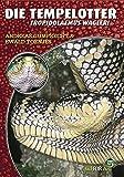 Die Tempelotter: Tropidolaemus wagleri (Art für Art: Terraristik)