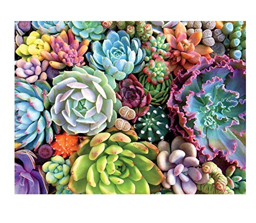 YCMXMY Jigsaw Puzzles 500 Pieces for Adults, Color Succulents, Wooden Assembling Decoration for The Home, 52X38Cm
