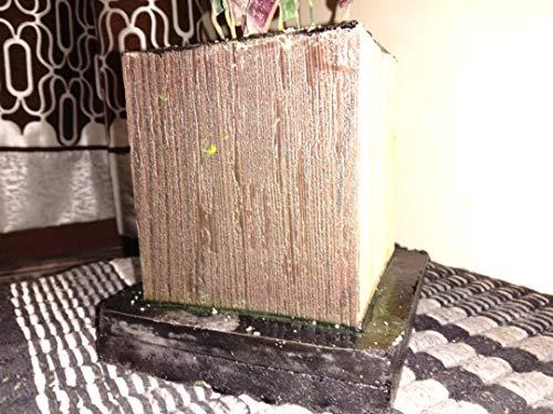 Anti Algen Set 25 Wasserpflanzen 15 Schwimmpflanzen, Aquarium - 3
