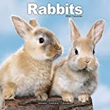 Rabbit Calendar - Cute Animal Calendar - Calendars 2019 - 2020 Wall Calendars - Animal Calendar - Rabbits 16 Month Wall Calendar by Avonside (Multilingual Edition)