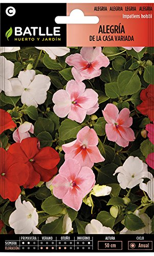 Semillas de Flores - Alegría de la Casa Impatiens Híbrida variada - Batlle