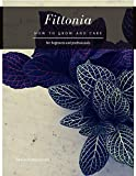 Fittonia: How to grow and care (English Edition)