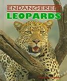 Leopards (Endangered!)