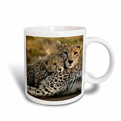 Queen54ferna _ 3 Cheetah With Cub In The Masai Mara Gr, Kenia Af21 JMC0167 Joe And Mary Ann McDonald Magic Transforming Tasse, 325 ml