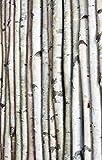 Wilson Enterprises Decorative Birch Poles 7 Ft. (4 Poles 1 1/2-2 1/2 Inch Diameter)