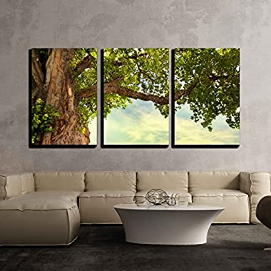 wall26 - 3 Piece Canvas Wall Art - Spring Meadow with Big Tree with Fresh Green Leaves - Modern Home Decor Stretched and Framed Ready to Hang - 24 x36 x3 Panels