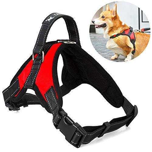 Atomzone Arnés para Perro ergonómico con Correa Ajustable - Máxima protección y Comodidad para tu Mascota en Todo Momento M (Mediana)