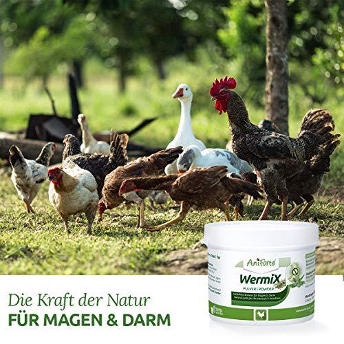 AniForte Wurm-Formel 50 g- Naturprodukt für Hühner, Gänse und Grossvögel - 3