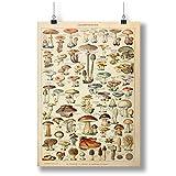 Mushrooms Print: Vintage Fungi Poster Art A0 A1 A2 A3 A4