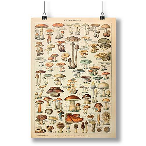 Mushrooms Print: Vintage Fungi Poster Art A0 A1 A2 A3 A4 Satin Foto Plakat p10122h