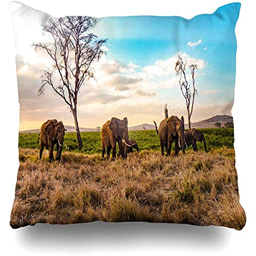 Housse de coussin Swamp Baby Eléphants d'Afrique Itinérance libre Kenya Lever de soleil Afrique Nature Babyelephant Herbe Pâturage Maison Taie d'oreiller Carré Taille 18x18 pouces Taie d'oreiller déco