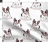 Bulldogge, Hund, Französische Bulldogge, Welpe, Schwarz
