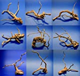 WFW wasserflora Nano Moorwurzel