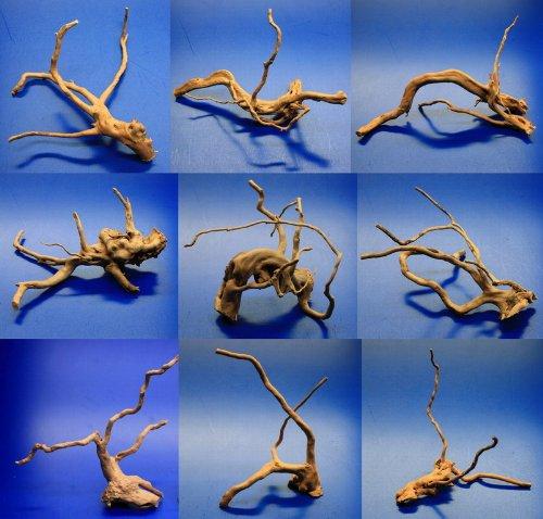 WFW wasserflora Nano Moorwurzel/Moorkienholz, Traumwurzel für den Garnelen Cube