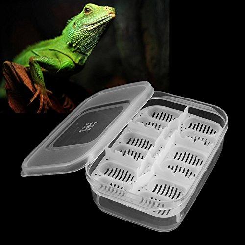 C-FUNN 12 Reptiles Oeufs Incubateur Plateau Gecko Serpent Oiseau Amphibiens Hatching Case Elevage Outils Boîte