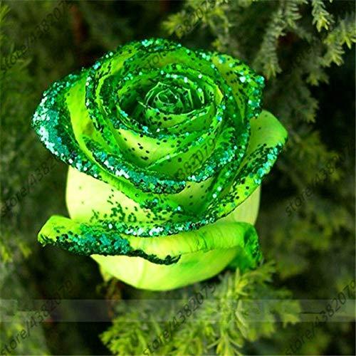 GEOPONICS SEEDS: 100 Stück/bag Rosenbaum, Rosenpflanzen, Bonsai Blumenpflanzen, Rosenbaum Pflanze Balkon & amp; Yard vergossen für Hausgarten: 19