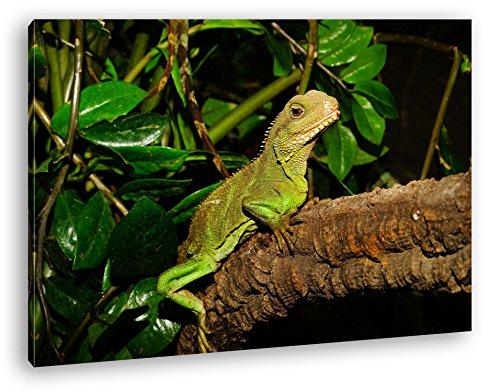 deyoli grüne Echse im Terrarium Format: 60x40 als Leinwandbild, Motiv fertig gerahmt auf Echtholzrahmen, Hochwertiger Digitaldruck mit Rahmen, Kein Poster oder Plakat