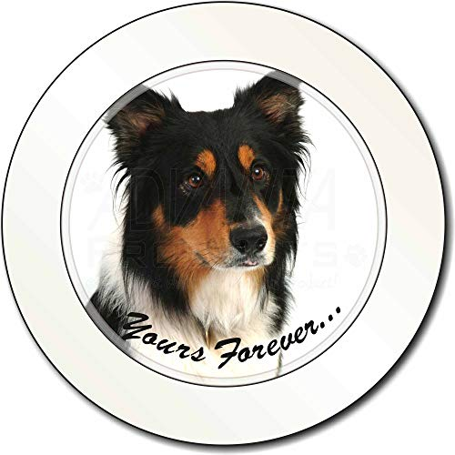 Advanta - Tax Disc Holders Tri-Color Border Collie Dog für Immer Dein. AutovignetteGenehmigungsinhab