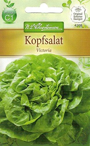 Chrestensen Kopfsalat 'Viktoria'